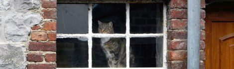 A Cat in a Window in Dinant, Belgium