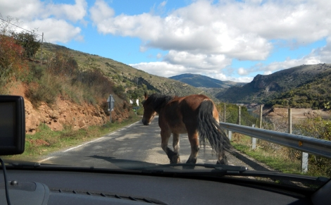 Drive to Mansilla with horses blocking our route