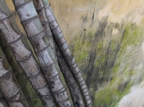 Bamboo against a faded yellow wall in Hoi An wall (Vietnam).