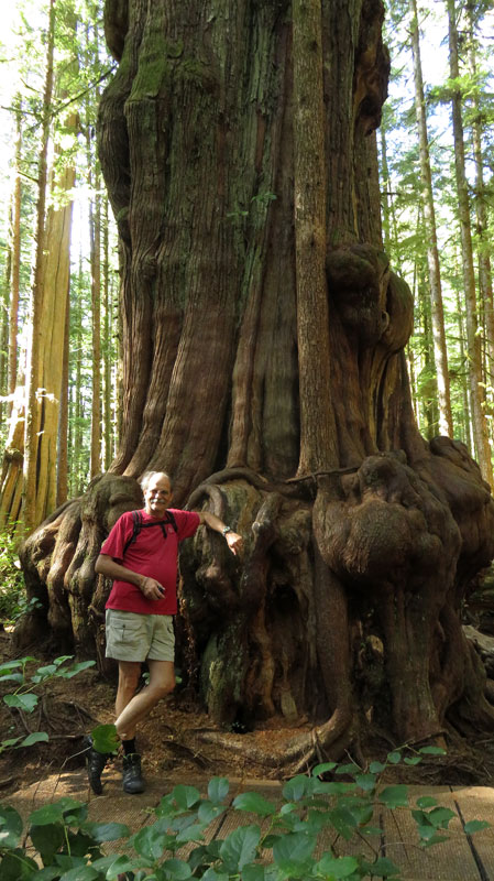 From Port Renfrew you can head off to Avatar Grove and see the giant and sometimes 'gnarly' cedars