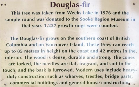 Douglas Fir sign at the Sooke Museum on Vancouver Island, Canada