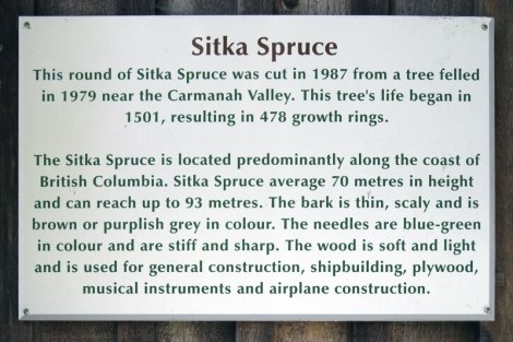 Sitka Spruce sign at the Sooke Museum on Vancouver Island, Canada