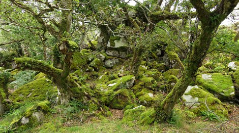 Mossy trees in Glenveagh National Park in Ireland