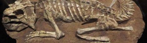 Skeleton of some lizardy creature at the oddball Prehistoric Museum on Dingle Peninsula, Ireland
