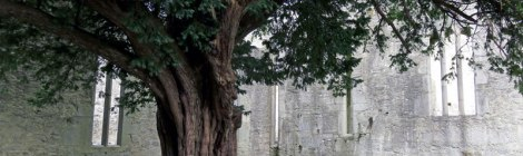 Muckross Abbey in Killarney National Park, Ireland