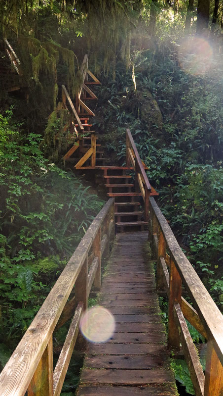 Stairways take you all though the Pacific Rim Rain Forest Trail on Vancouver Island, Canada