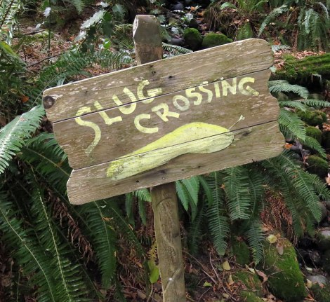 'Slug Crossing' sign in the North Vancouver forest