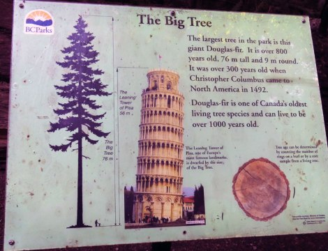 info sign in Cathedral Grove about the big tree