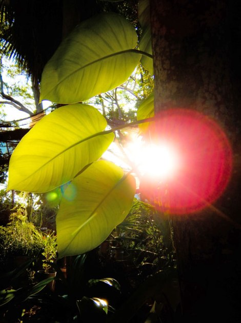 Sun glow through the leaves in Huatalco, Mexico