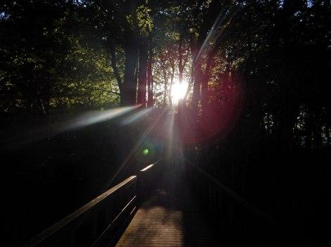 Sunlight flares through the trees at Mons Klint in Denmark