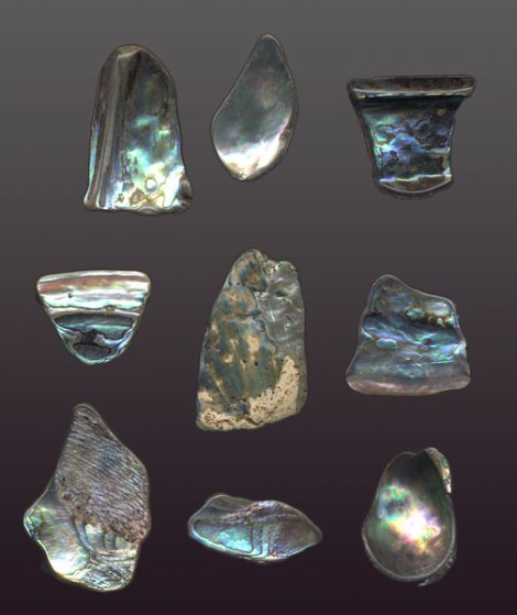 pieces of abalone shell
