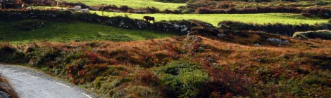 Beara Peninsula in Ireland: drive down a narrow road