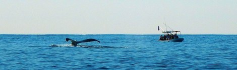 The tail of a whale on our whale-watching boat trip in Puerto Escondido, Mexico