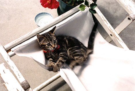 Merlin as a kitten in a lawn chair