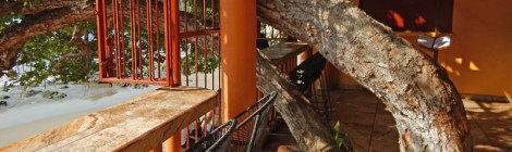 La Terracita in Zihuatanejo, with trees growing up through the floors.