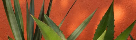 Agaves really do seem to have an affinity for orange walls. This in the Patio of a Coyacan Museum