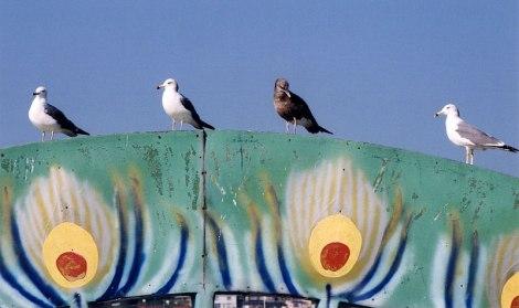 Sendai to Matsushima ferry tour: detail of seagulls perching on the peacock tail